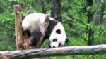 Sichuan Tour: 5 Day Panda Keeper and Chengdu Highlights Tour
